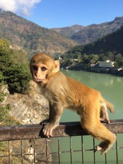 Go see the monkeys in India!